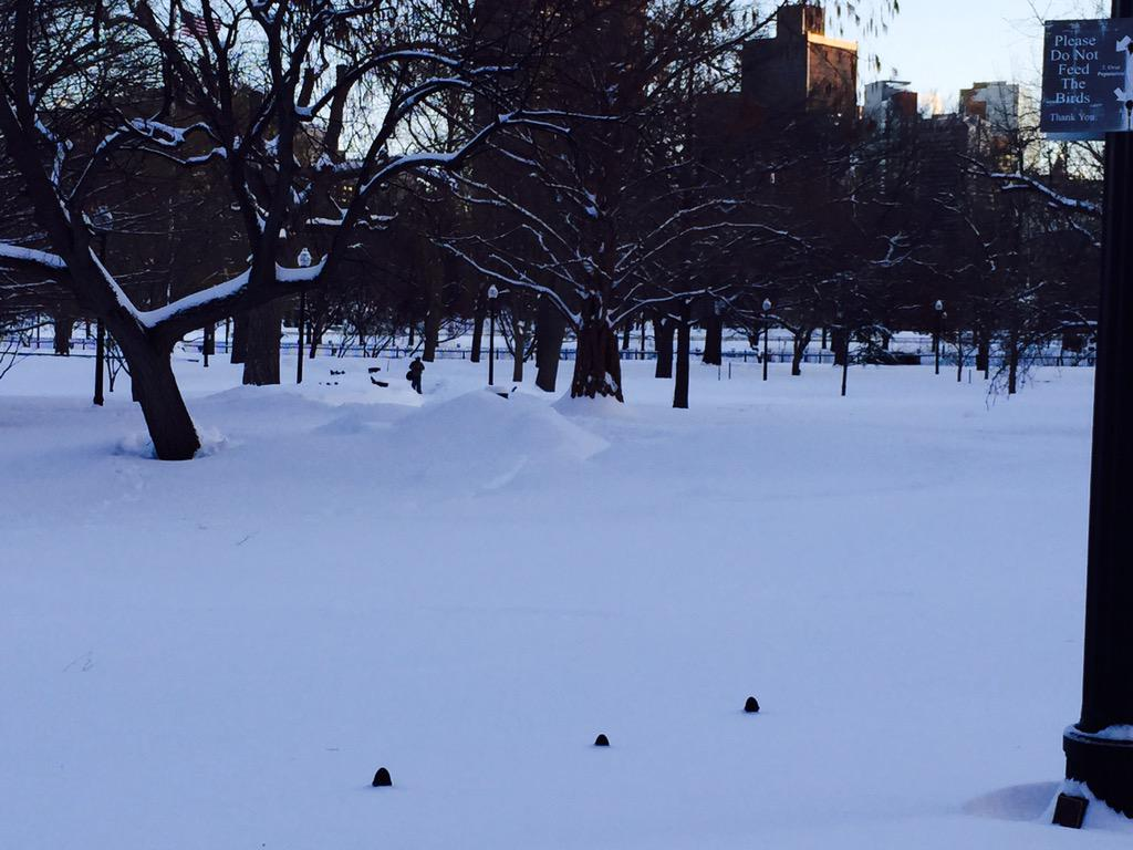 To put this in perspective, the black dots are the top of the fence. @FOPG #Snowmageddon2015 #boston http://t.co/1Wv6LyIaCc