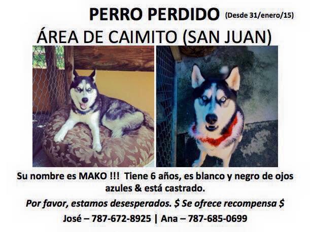 Se busca a Mako, Siberian Husky macho de 6 años, castrado, blanco y negro con ojos azules en #SanJuan! Recompensa! http://t.co/X9ltyWnIaG