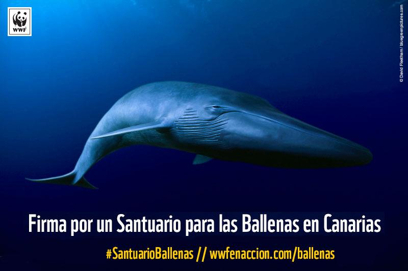 La iniciativa #SantuarioBallenas cuenta con el apoyo de la mayoría de los europarlamentarios españoles, menos del PP http://t.co/dtcfg1wsFN