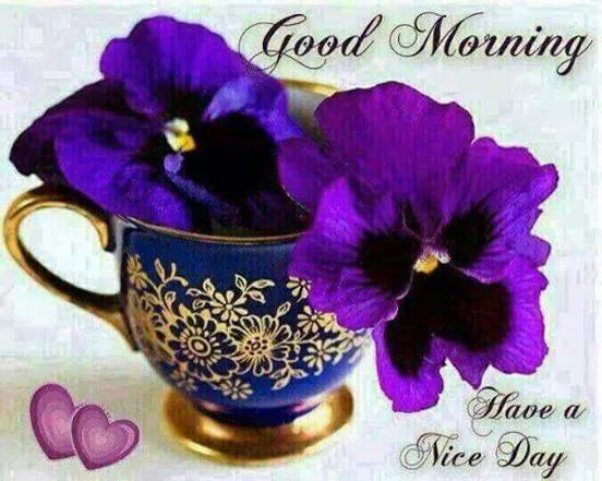 Hai Friends Good Morning