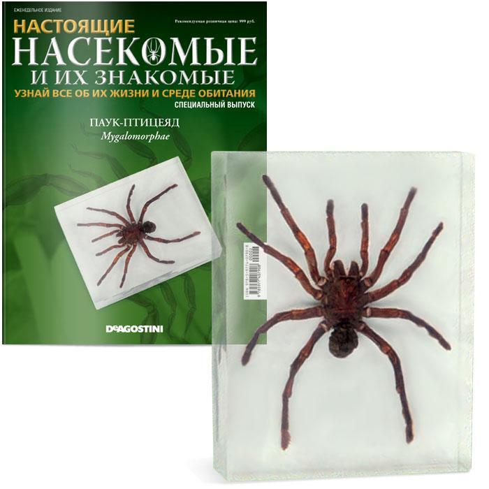 настоящие насекомые и их знакомые 13 выпуск