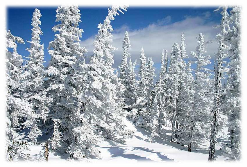 картинки зима в лесу анимация красоты была