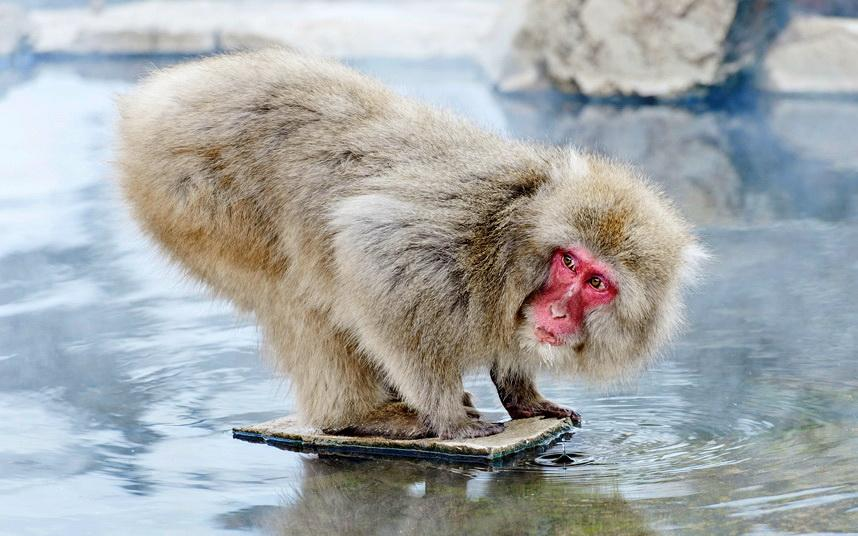 обезьяны и вода картинки феофилу