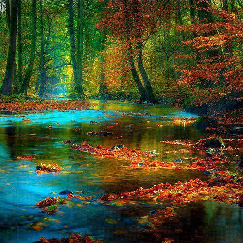 "Beautiful colors☆ ""@Saffron606: #Autumn http://t.co/ooO28iVhcF"""