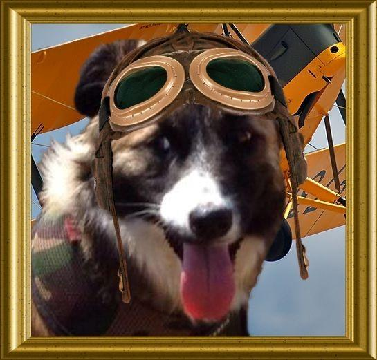 * #TheAviators and GUESTS*  - please enjoy your ENGLISH CHANNEL AIRSHIP ADVENTURE w/ Capt. Bernard @BernardsBark http://t.co/76nAraiHAt