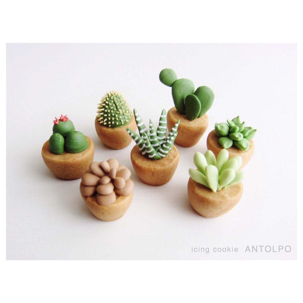 サボテンと多肉植物アイシングクッキー pic.twitter.com/KVaBoAr5Xa