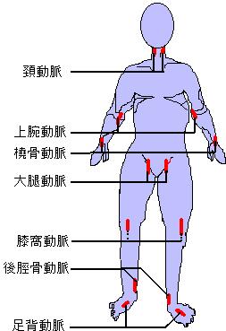 知 触 橈骨 動脈