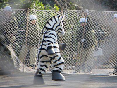 去年はシマウマが脱走したという設定で訓練したそうです。写真だけ見るとすごくシュール。でも大切な訓練ですね。⇒ユキヒョウが逃げた!? 東京都・多摩動物公園が対策訓練を実施news.mynavi.jp/news/2015/01/2… pic.twitter.com/9Tfv6mJmQU