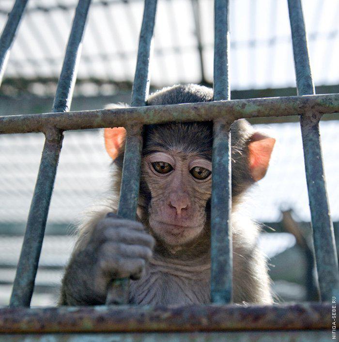Прикольная картинка тюрьма, днем рождения алия