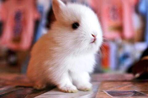 Some bunny loves you http://t.co/thPX8fWhSY