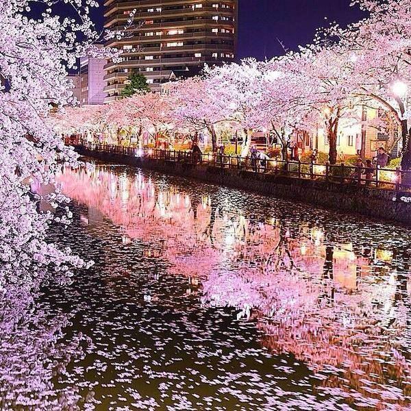 Beautiful Places In Japan Tumblr: واثقه بربي (@Somah282)