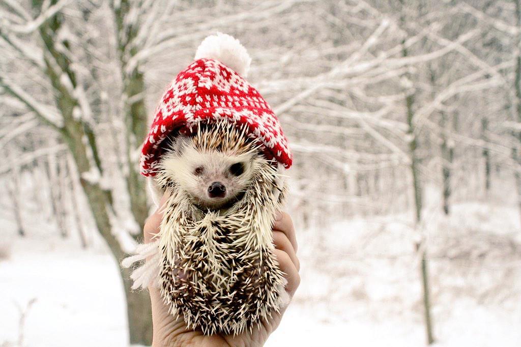 @fox25news shovel buddy! #fox25blizzard http://t.co/rryZ4XHa51