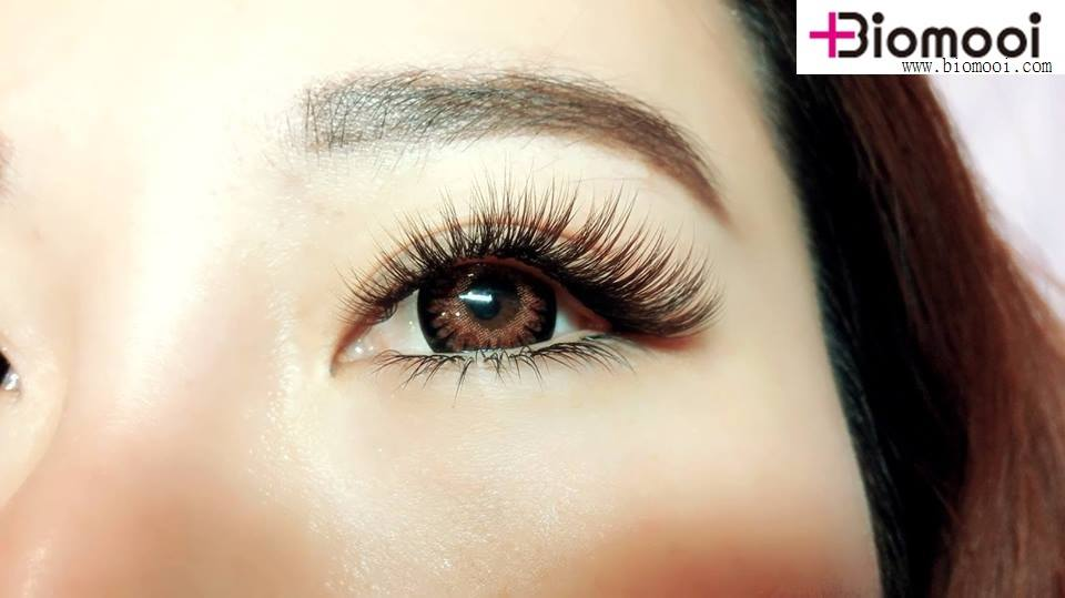 120d4e6a17e Camellia Lashes specially design for volume up! Save your time&Earn more  moneypic.twitter.com/bzymFp0XQF