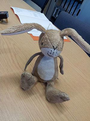 .@STVAberdeen @AberdeenCity can you help us reunite Nutbrown Hare, found in the snow @aberdenuni , with his owner? :( http://t.co/KZBs05ms2i