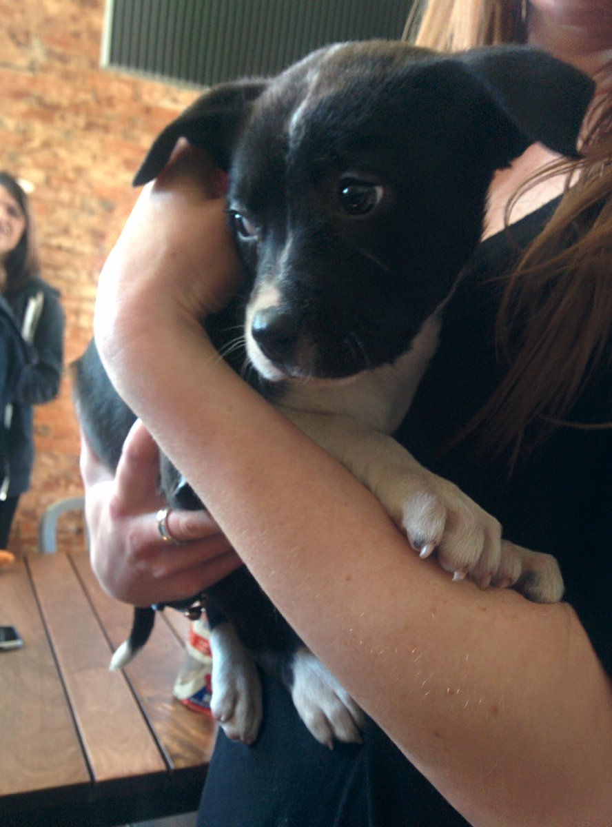 @Uber_ATL brought us puppies! @neboweb http://t.co/mlCvhwlc7a