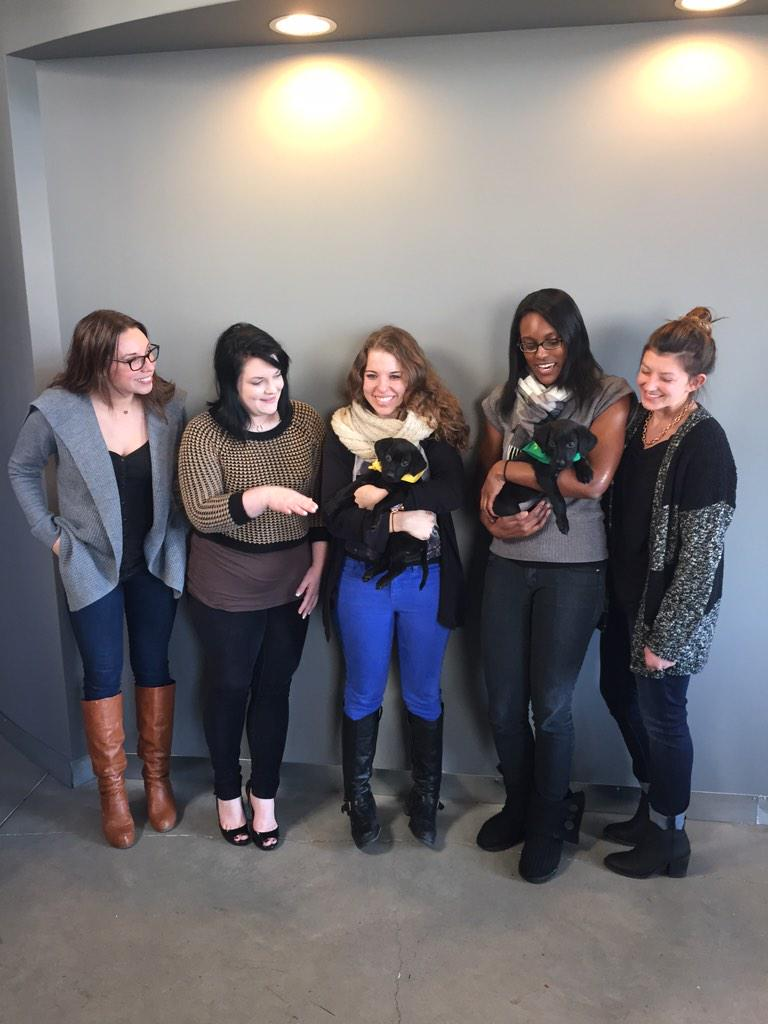 Uber Ohio brought some puppies by from the Cleveland APL to the Scene office! @Uber_OHIO @ClevelandAPL http://t.co/OxFSRLxsqL
