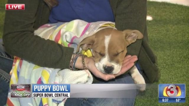 .@Uber delivers @azhumane puppies to celebrate the @AnimalPlanet #PuppyBowl and @AZSuperBowl http://t.co/ziWB14oHDn http://t.co/lf6ayOW5x9