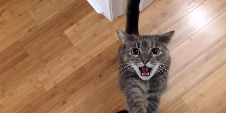 YouTuber Emlodrone's '7lb Nutball' Cat Is Totally Insane (Seriously)—But Very Funny http://t.co/DILOjgjJGX http://t.co/I8jXm28AWO