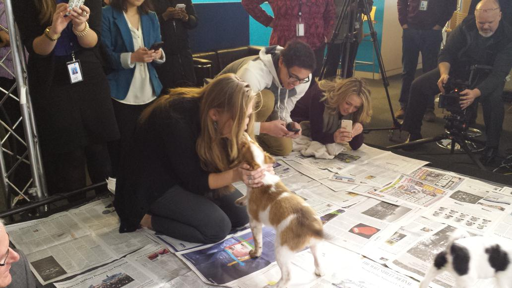 Uber brought puppies to @USATODAY and won us over with their furry love! http://t.co/fDDxZNg0w6