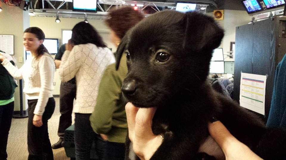 #Uber delivered puppies in the D.C. area Wednesday. WTOP tested it out (VIDEO) http://t.co/wQdnIDIWBM http://t.co/oTZrfWpLJ1