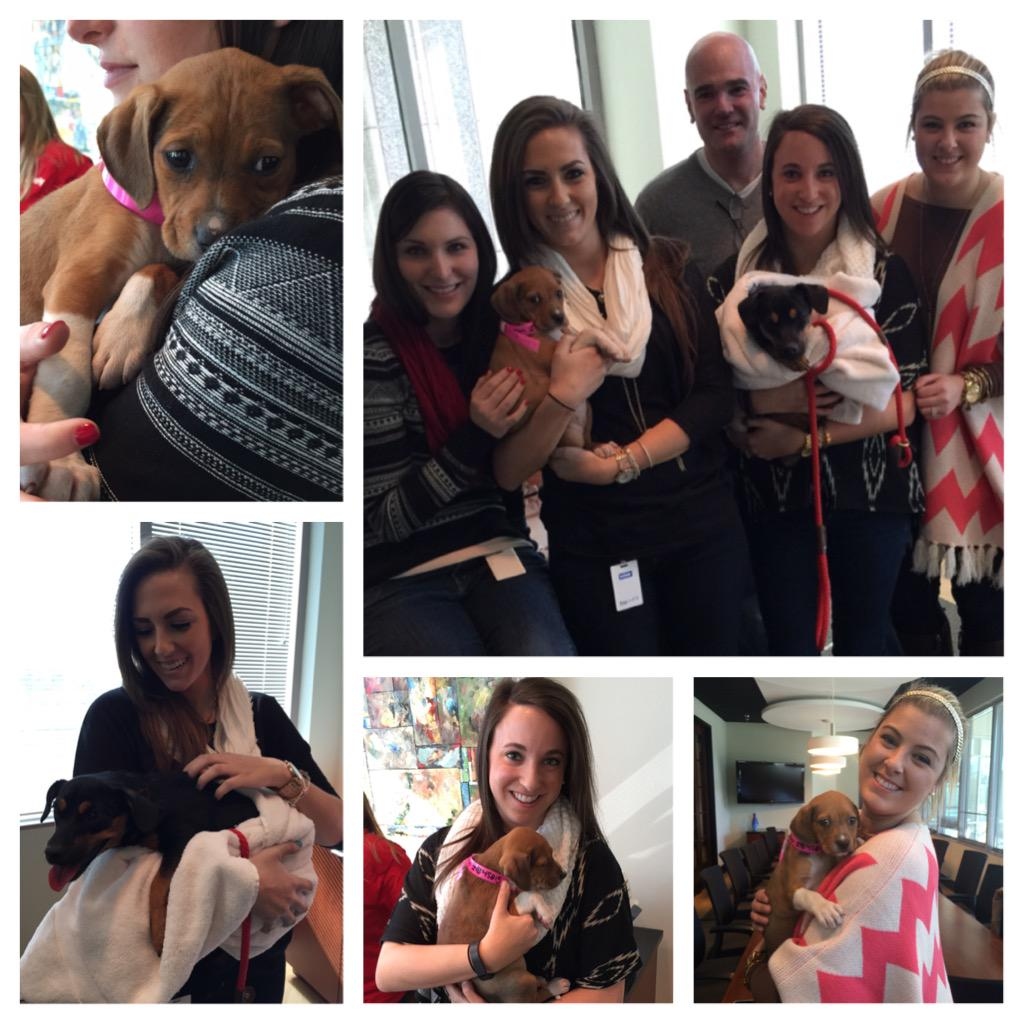 During our break, we play with puppies #UberPuppyBowl @atlantahumane @Uber http://t.co/caQSO5EH5C