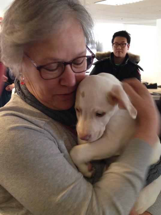 Bringing the newsroom to a standstill: Uber arrived with puppies! http://t.co/MZRauamso2