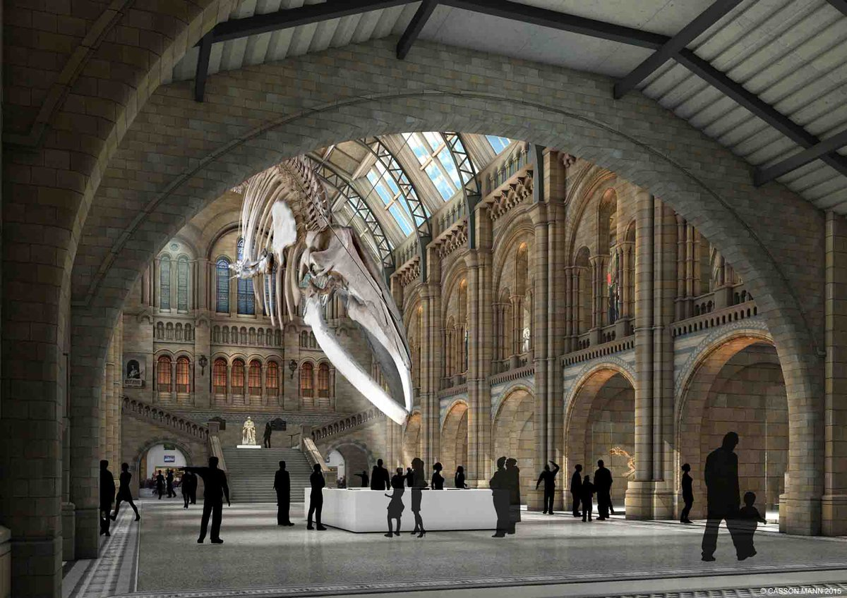 Huge news for Hintze Hall: Blue whale to take centre stage at the Museum http://t.co/NvyVadKrNe http://t.co/wV3QysLUkC