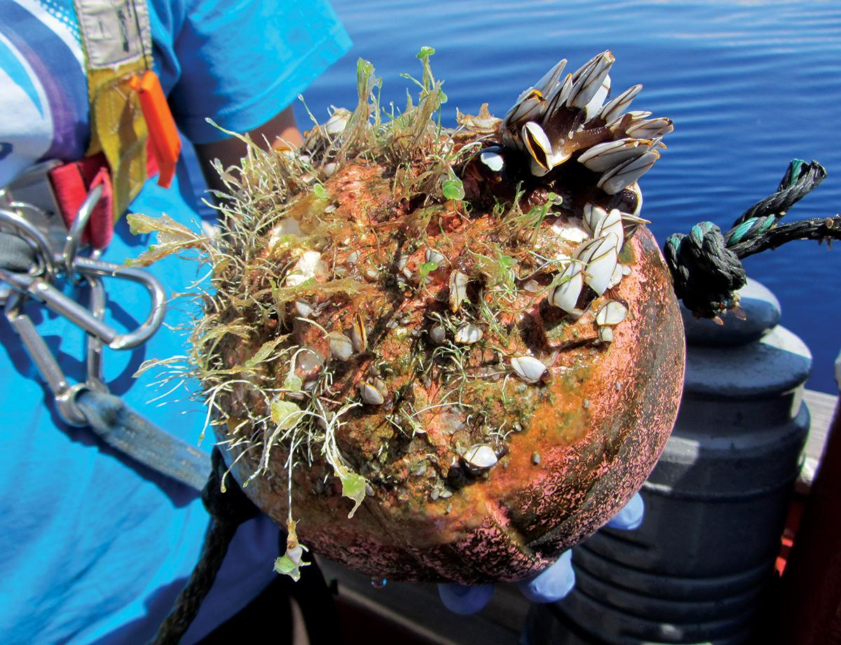 plastic debris is providing a whole new ecosystem at sea