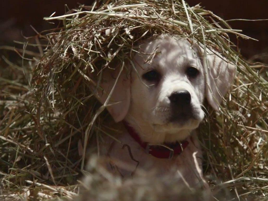 Super Bowl 2015 Ad Round-Up: Puppies, Pac-Man and The Brady Bunch http://t.co/z50LG7W6De #SB49 http://t.co/w4fFlX9bBc