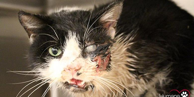 'Zombie Cat' Rises From The Grave After It Was Buried Alive — #ZombieCat http://t.co/9pjKjvzG63 http://t.co/DrmlW278ud