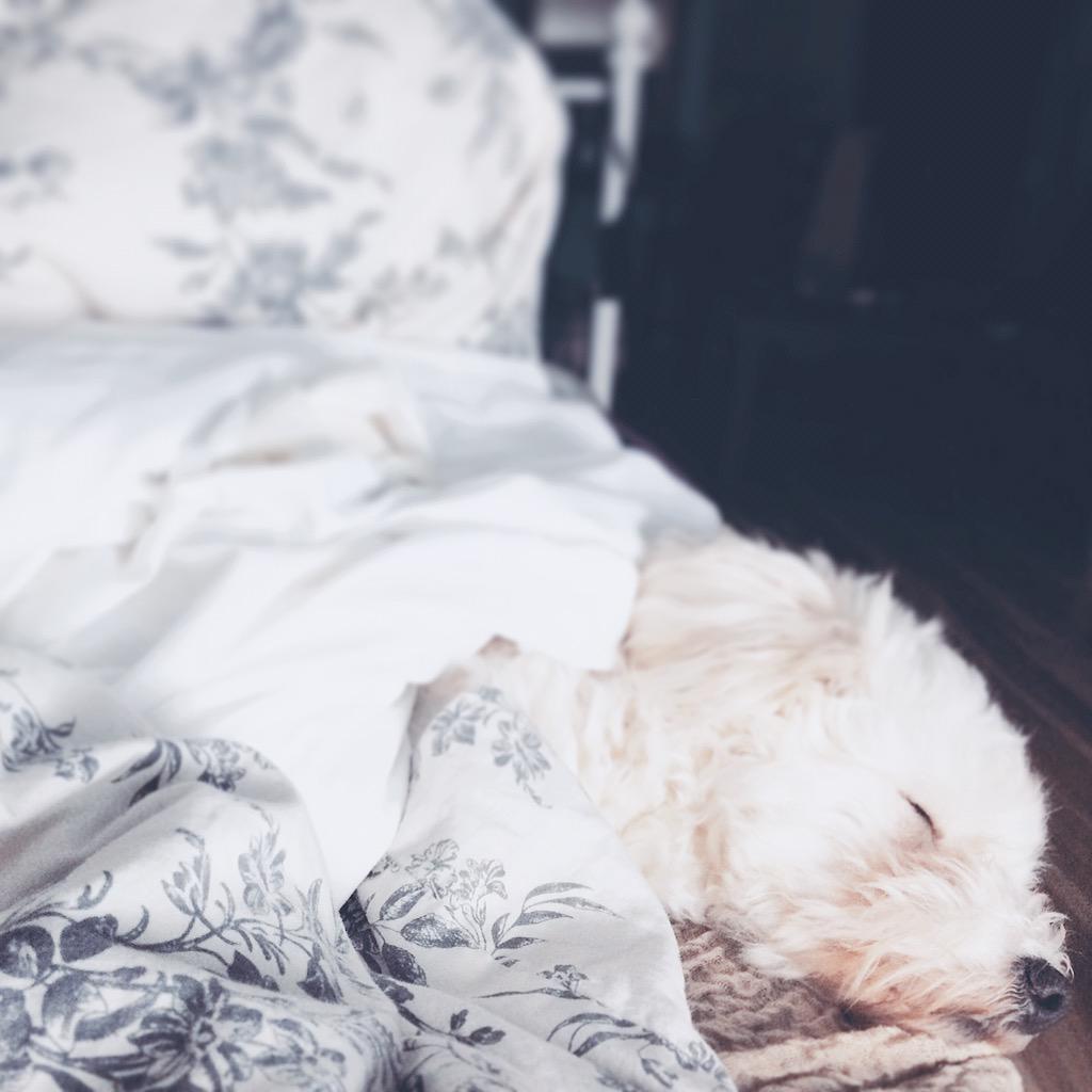 It's a tough life for Sophie http://t.co/Zcn7gTeVGm