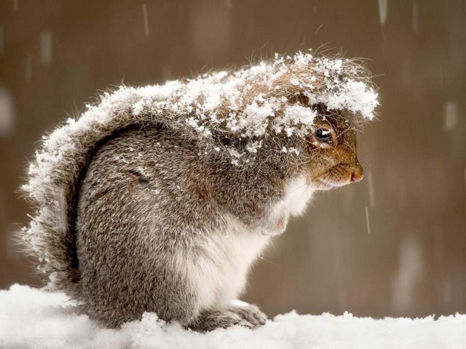 l'hiver ! B8jUNv_IAAAXXYw