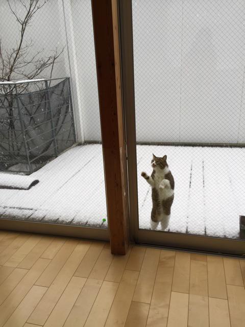 外に出たいと訴えたので出した5秒後 http://t.co/z5xHqWqtyq