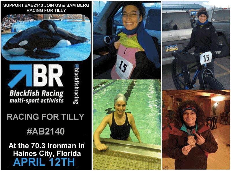 RT @blackfishracing: @joannakrupa RACING for TILLY 4/12/15 @IronmanTri Haines City, FL #freetilly #AB2140 #freelolita http://t.co/EeyuvpE3aM