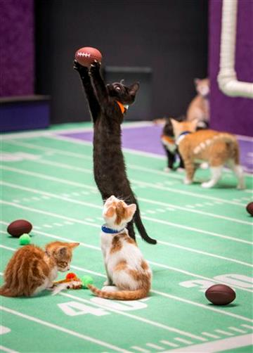 Hallmark Channel's Kitten Bowl teams vie for purring rights http://t.co/723yEyUJd5 #meow http://t.co/fvkx6KN61b