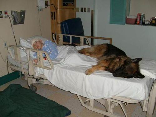 #Love Heart Warming §§ @canine_rights http://t.co/2OTKckn1EF