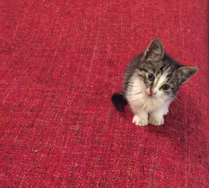 היי זה ירמיאו אוטוטו החתול לשעבר של ביצ׳רית. אני קטן וחמודי אוהב לשחק ומחפש בית שאוכל לגדול בו. אפשר לבוא אליך בבקשה? http://t.co/zS6IYVYFk8