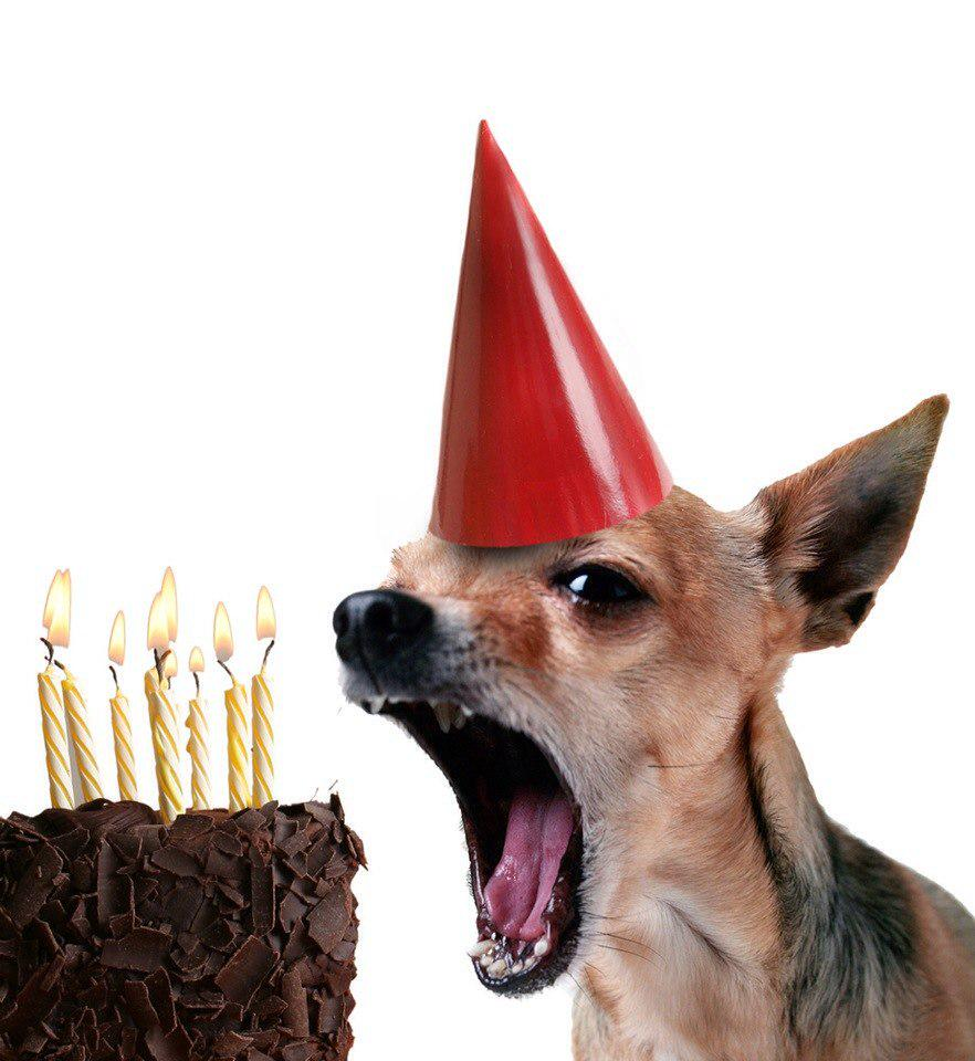 Открытки с днем рождения смешные с животными