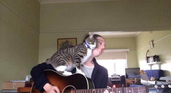 弾き語るお姉さんを邪魔する猫、許さざるを得ないエンディングに youtu.be/7udUxofdBIE pic.twitter.com/bbtpys6JK1