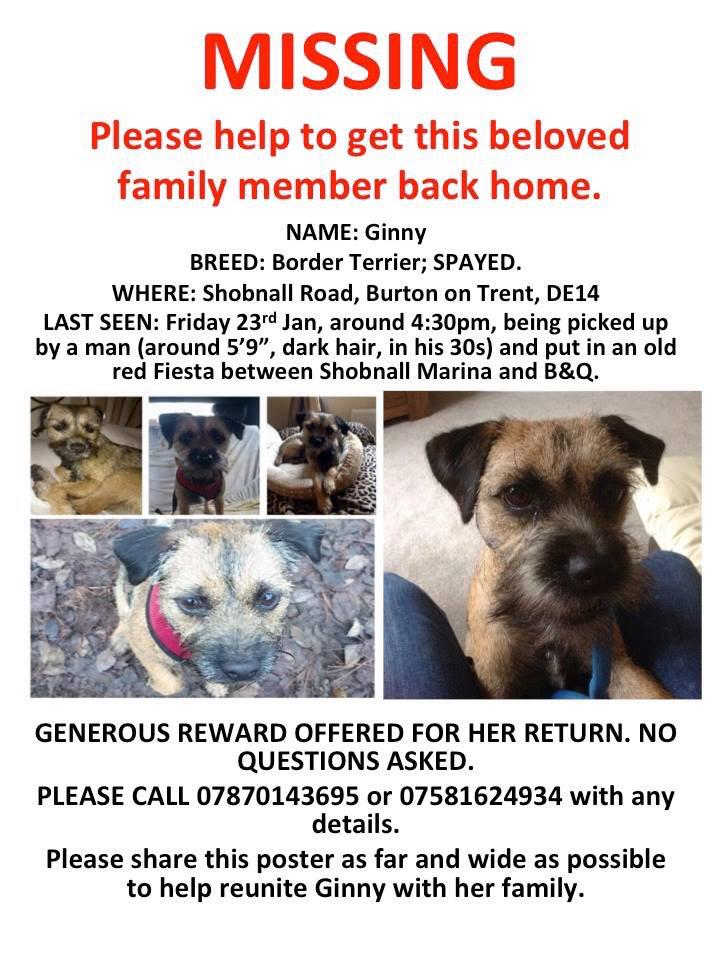 """""""@FindGinny: WE NEED YOUR HELP: You helped to @FindTobyTerrier now can you help to #FindGinny? DM 4 campaign info http://t.co/itLLi0Oonk"""""""