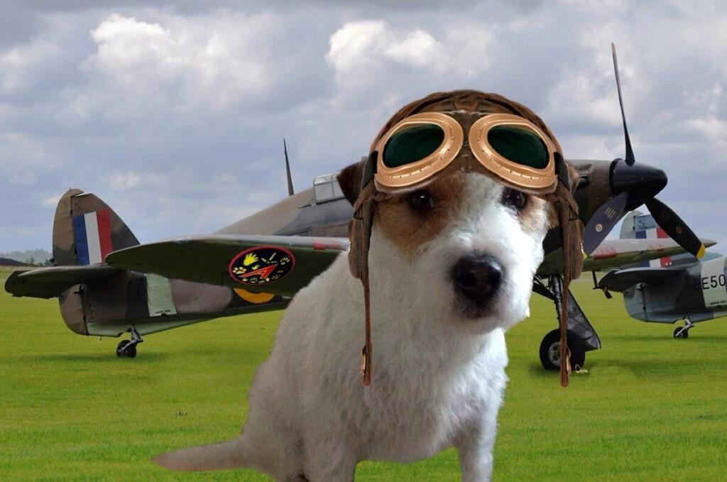 #TheAviators @BernardsBark  this is Juliet India Mike 42 ready and very excited for our flight tonight http://t.co/seJrpzxpai