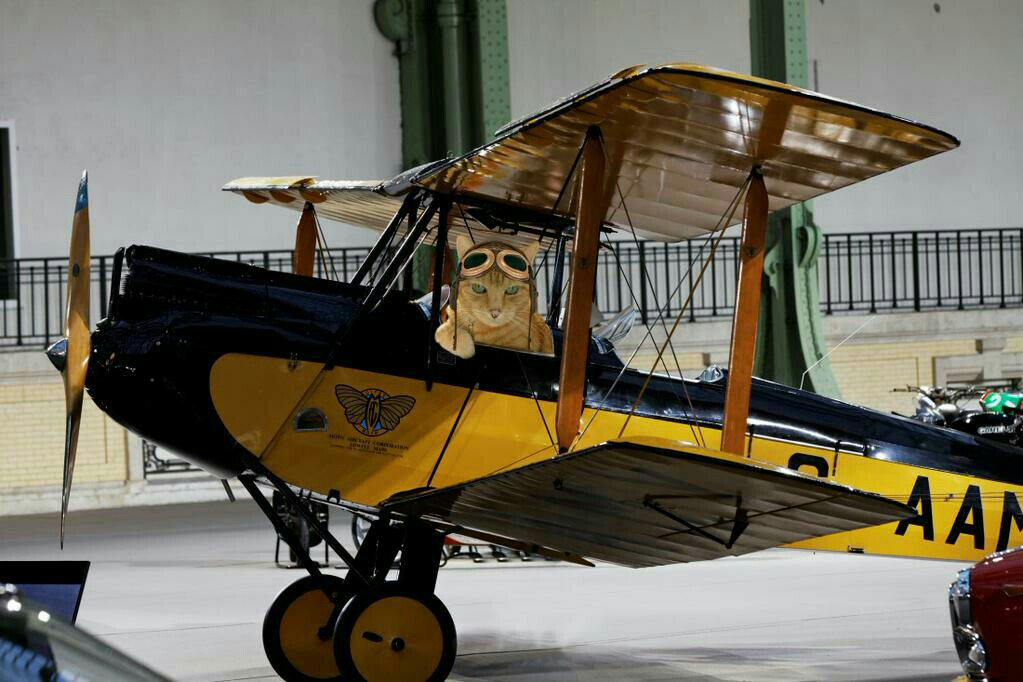 #TheAviators Tanto Oscar Whiskey77 airborne looking for @BernardsBark @Ottogingerboy circles round and round. http://t.co/Zt0kevA73N