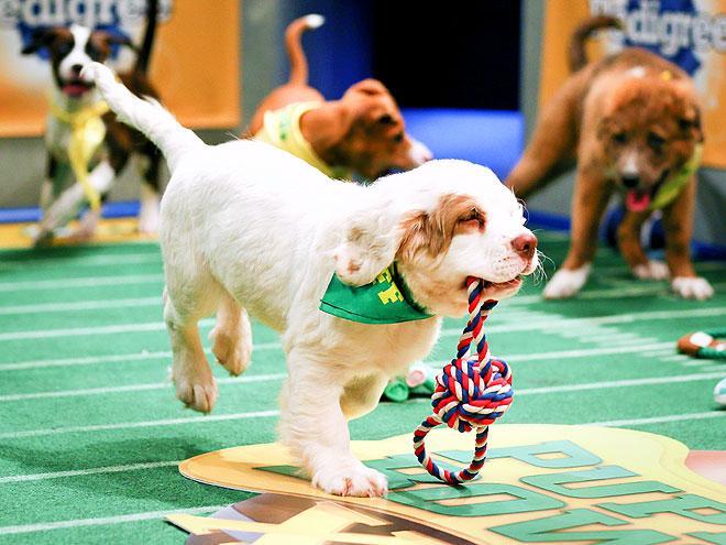 It's #PuppyBowl Sunday! What — is there some other game on today? RT if you're watching with us! http://t.co/QBebfVkmxM