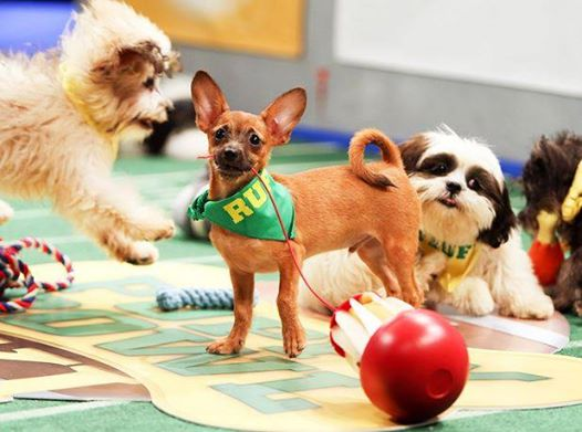 It's time: #PuppyBowl kicks off right now! Retweet if you're watching! http://t.co/4cZGFLnnWe