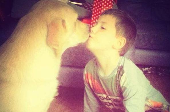 Guys PLSE RT @IrishMirror: Evil thieves stole autistic son's pet dog: http://t.co/3F5ZaXj0EK http://t.co/MTQPKvhhST No joke, a biggie