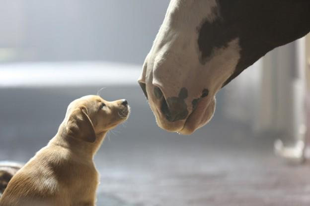 Let's stop horsing around — puppies and beer, what's not to love in that @Budweiser #SB49 ad? #BestBuds http://t.co/HaPmidJCUE