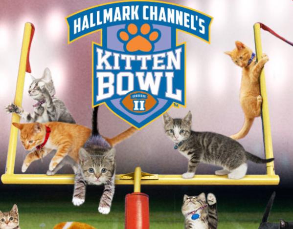 スーパーボウルと毎年同じ日に開催されるキティ・ボウル(正式名はキトゥン・ボウル)!今年も安定の可愛さで開催されました!hallmarkchannel.com/kitten-bowl pic.twitter.com/OK8ihwsGGL