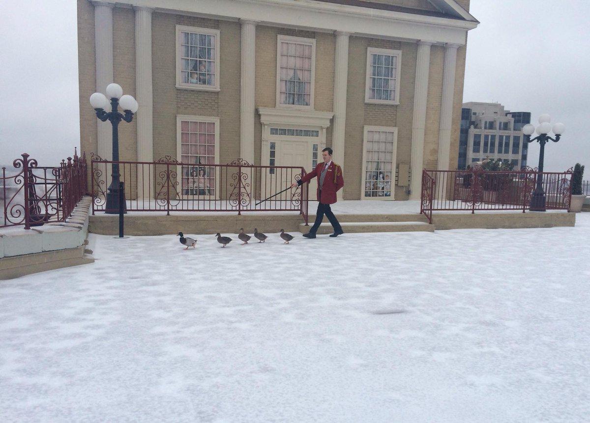 Rain, snow, sleet or ice, the Peabody Ducks report for duty. #DuckMarch #memwx #memice http://t.co/MwL6gbpaVr