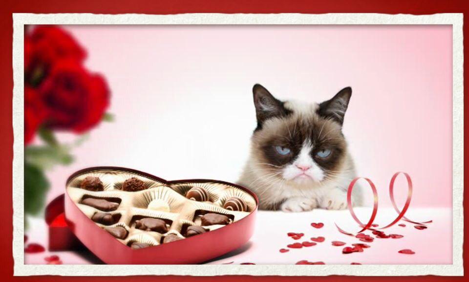 жрец аполлона, валентинки с котятами фото был
