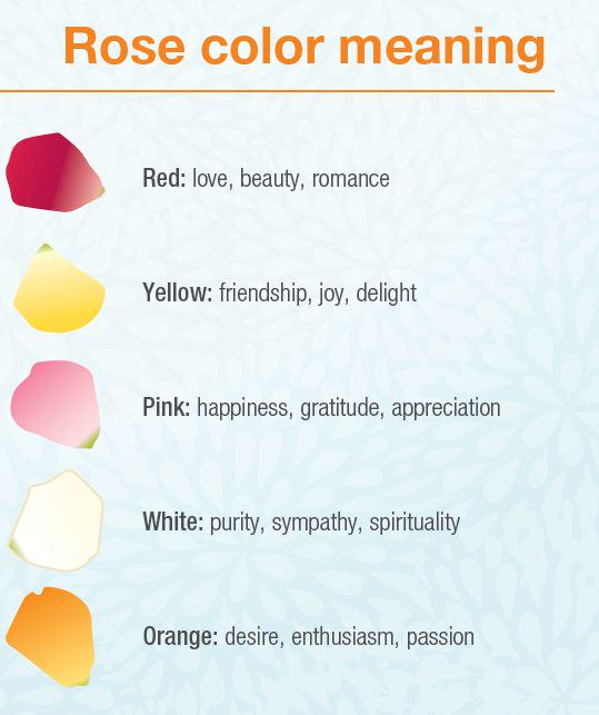 Syngenta On Twitter Do You Know What Different Rose Colors Mean